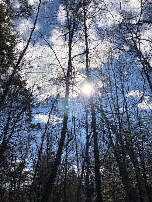 serene trees with sun poking through